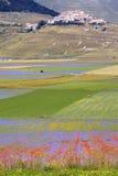 De linze die in Castelluccio Di Norcia bloeien Duizenden kleuren Stock Afbeelding