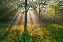 De ljusa sunstrålarna Royaltyfri Fotografi