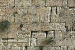 De loeiende Muur, Jeruzalem, Israël Stock Fotografie