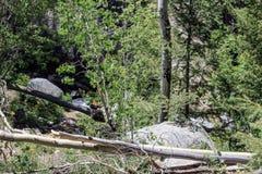 De logboeken bewaken het Bos stock foto's