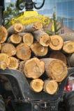 De Logboeken die van de pijnboom de Aanhangwagen van het Hout registreren royalty-vrije stock foto