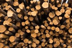 De Logboeken van de achtergrond besnoeiingspijnboom Textuur royalty-vrije stock foto's