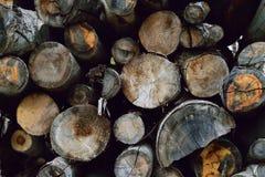 De logboeken van de besnoeiingsboom stapelden zich omhoog in bos op Stock Foto