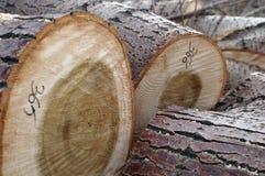 De logboeken van de boom Stock Foto's