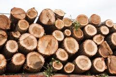 De logboeken van de pijnboom die op vrachtwagen worden geladen Stock Foto