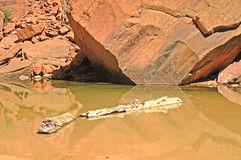 De logboeken van het water royalty-vrije stock foto's