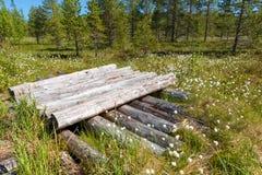 De logboeken worden opgestapeld op een bosmoeras op Anzersky-Eiland royalty-vrije stock afbeeldingen