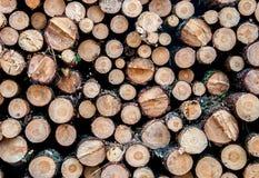 De logboekenachtergrond van de boom Royalty-vrije Stock Fotografie