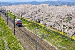 De Logistische trein liep langs de spoorweg aan Funaoka-Post in de Lente Sakura Cherry Blossom Season, Sendai, Japan Stock Afbeelding