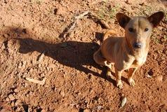 De lokale hond van Thailand en van Zuidoost-Azië Royalty-vrije Stock Afbeelding