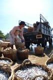 De lokale vissers uploaden visserij op de vrachtwagen aan de verwerkingsinstallatie in Lagi-strand Royalty-vrije Stock Foto