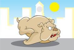 De looppas van de hond Stock Foto