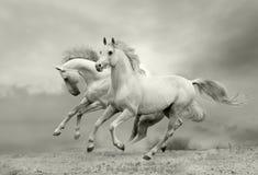 De looppas van paarden stock afbeeldingen