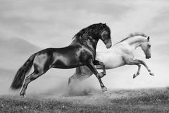 De looppas van paarden Stock Foto