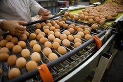 De lopende band van eieren Stock Afbeeldingen