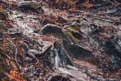 De lopende kreek in het bos reinigt alles in zijn weg stock afbeeldingen