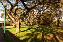 De los aliados public park, Montevideo Royalty Free Stock Photos