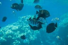 De los arrecifes de coral en Sharm El Sheikh Fotos de archivo