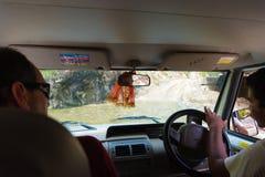 De los vehículos de camino con los turistas en área de la protección de Annapurna, Nepal fotos de archivo