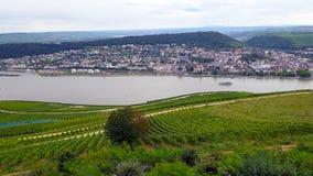 de los viñedos a lo largo del río Rhine Foto de archivo libre de regalías