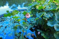 de lotusbloem in Fanling Hong Lok Park HK Royalty-vrije Stock Foto's