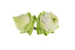 De lotusbloem van het close-uppaar Stock Afbeeldingen