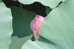 De lotusbloembloem van Tokyo Royalty-vrije Stock Afbeeldingen