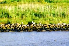 De Louisiana våtmarkerna Arkivbild