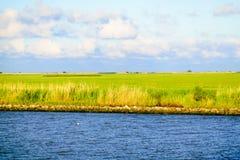 De Louisiana våtmarkerna Royaltyfria Foton
