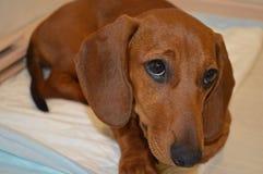 De loyaalste hond in de wereld Stock Afbeeldingen