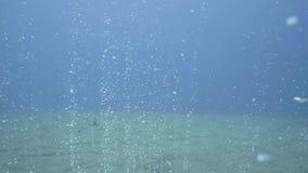 De luchtbellen van zandige overzeese bodem die tot de mening toenemen die van het oppervlaktepunt duiken zwemmen stock footage
