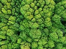 De luchtfoto van het menings mooie vergankelijke bos van de hommel Stock Fotografie