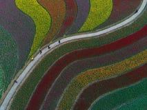 De luchtfoto van tulp bloeit en multicolored melodie Royalty-vrije Illustratie