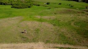De luchtlengte van de boze mens werpt een steen aan quadcopter Ontevreden wandelaar die hommel achtervolgen omdat privacyschendin stock video