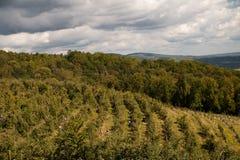 De LuchtMening van de Rijen van de boomgaard van de appel royalty-vrije stock foto's