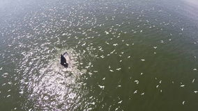 De luchtmening van de walvis van Bryde en vele vogels gaan jagend op het strand, de walvis van Eden in golf Thailand stock videobeelden