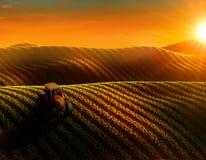 de luchtmening van gebied met rijen van het kweken van gewas of groenten en de tractor ploegen Royalty-vrije Stock Afbeelding