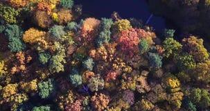 De luchtmening van het kleurrijke de herfstbos kijkt neer op de herfstbos neer Kijkend op de ongelooflijk mooie herfst stock videobeelden