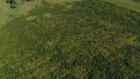 De luchtmening van het de zomergebied stock videobeelden