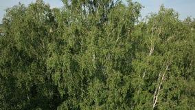De luchtmening van moeras landt dichtbij de riviervallei stock videobeelden