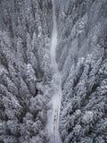De luchtmening van sneeuw behandelde bomen en de sneeuw behandelde weg in de bergen royalty-vrije stock foto's