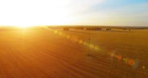 De luchtmening van UHD 4K Mid-air vlucht over geel tarwe landelijk gebied stock videobeelden