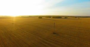 De luchtmening van UHD 4K Mid-air vlucht over geel tarwe landelijk gebied stock footage