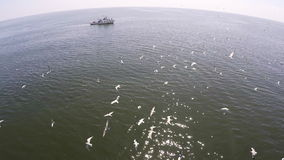 De luchtmening van vele vogels gaat jagend op het strand, de walvis van Eden in golf Thailand stock video