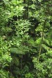 De luchtwortels zijn wortels boven de grond en in divers gevonden stock afbeelding