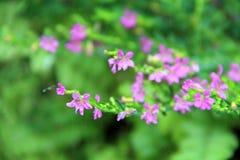 De Luibloemen kleuren purple met macro Stock Afbeeldingen