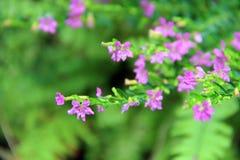 De Luibloemen kleuren purple met macro Stock Afbeelding