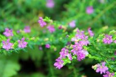 De Luibloemen kleuren purple met macro Royalty-vrije Stock Foto's