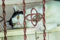 De luie grijze kat bepaalt op de vloer Royalty-vrije Stock Foto