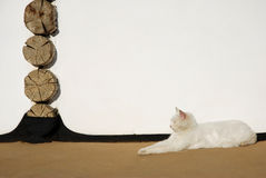 De luie kat Stock Afbeelding